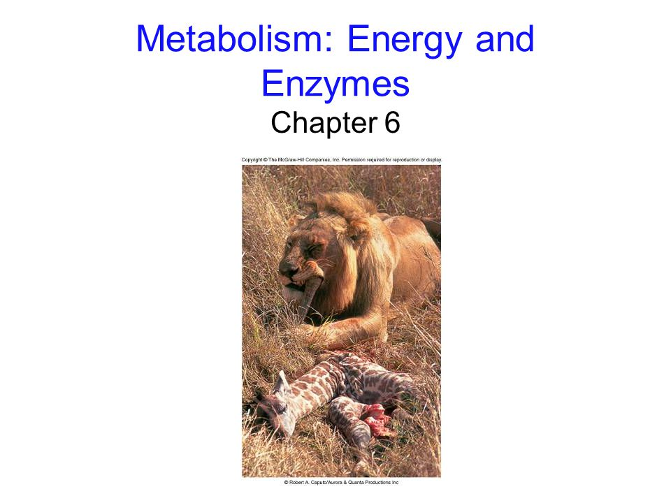 Metabolism: Energy and Enzymes Chapter 6