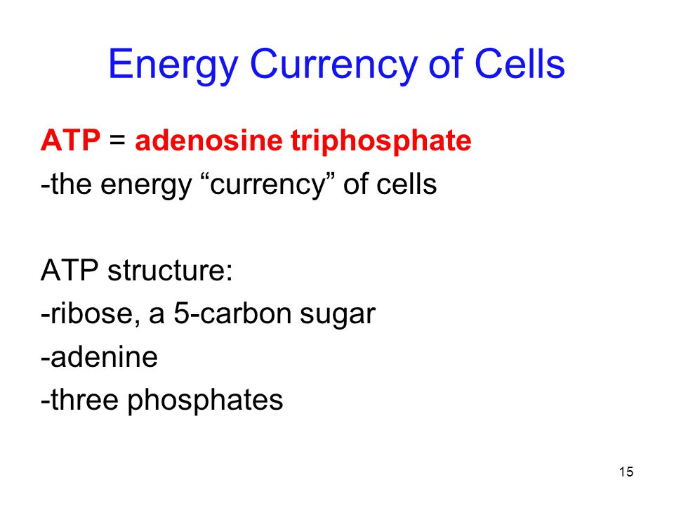15 Energy Currency of Cells ATP = adenosine triphosphate -the energy currency of cells ATP structure: -ribose, a 5-carbon sugar -adenine -three phosphates