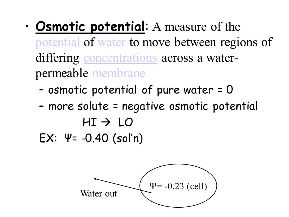 Osmotic potential: A measure of the potential of water to move between regions of differing concentrations across a water- permeable membrane potentialwaterconcentrationsmembrane –osmotic potential of pure water = 0 –more solute = negative osmotic potential HI  LO EX: Ψ= -0.40 (sol'n) Ψ= -0.23 (cell) Water out