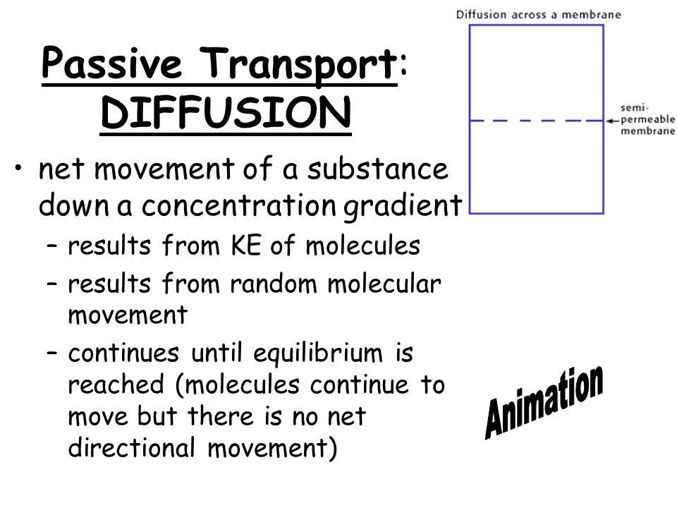 ACTIVE TRANSPORT: EXOCYTOSIS & ENDOCYTOSIS transport of large molecules (e.g.