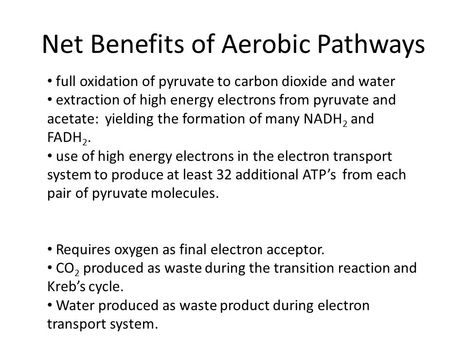Net Benefits of Aerobic Pathways full oxidation of pyruvate to carbon dioxide and water extraction of high energy electrons from pyruvate and acetate: