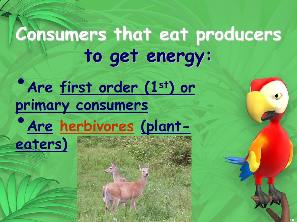 10 Consumers that eat producers to get energy: Are first order (1 st ) or primary consumers Are herbivores (plant- eaters)