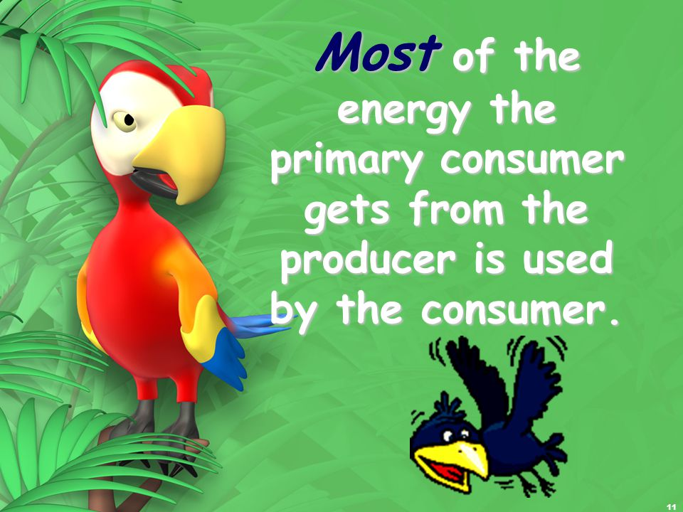 11 Most of the energy the primary consumer gets from the producer is used by the consumer.