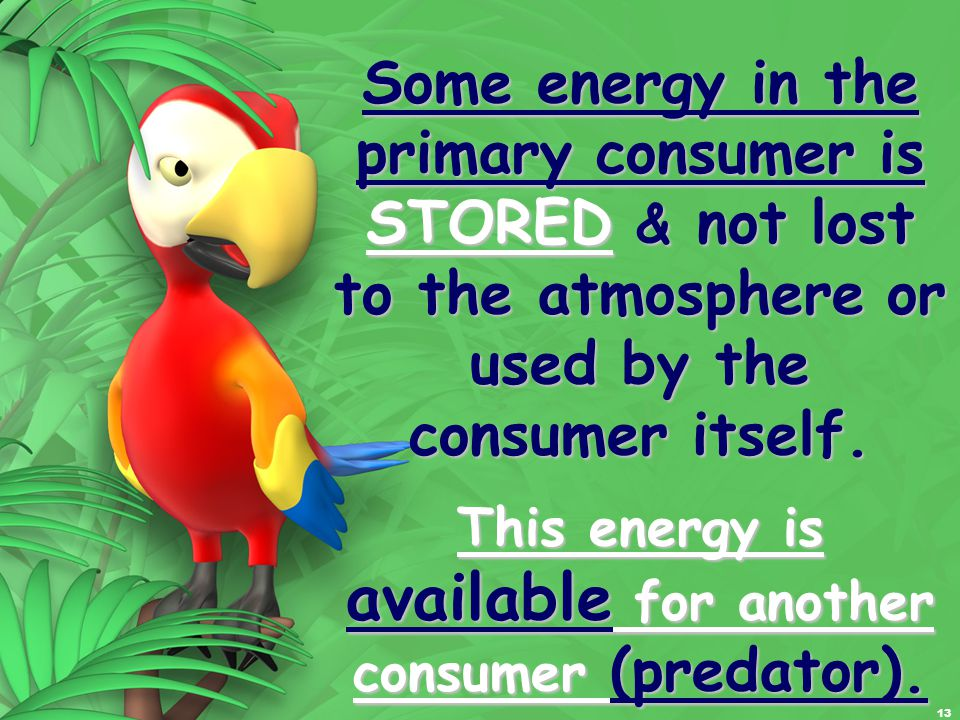 13 Some energy in the primary consumer is STORED & not lost to the atmosphere or used by the consumer itself.
