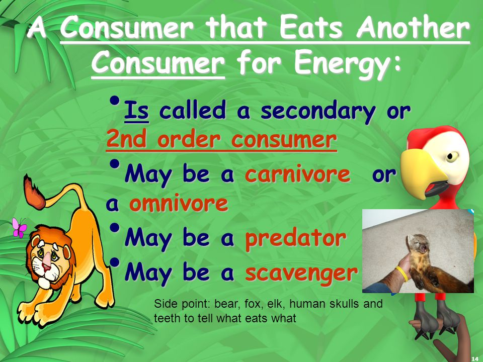 14 A Consumer that Eats Another Consumer for Energy: Is called a secondary or 2nd order consumer Is called a secondary or 2nd order consumer May be a carnivore or a omnivore May be a carnivore or a omnivore May be a predator May be a predator May be a scavenger May be a scavenger Side point: bear, fox, elk, human skulls and teeth to tell what eats what