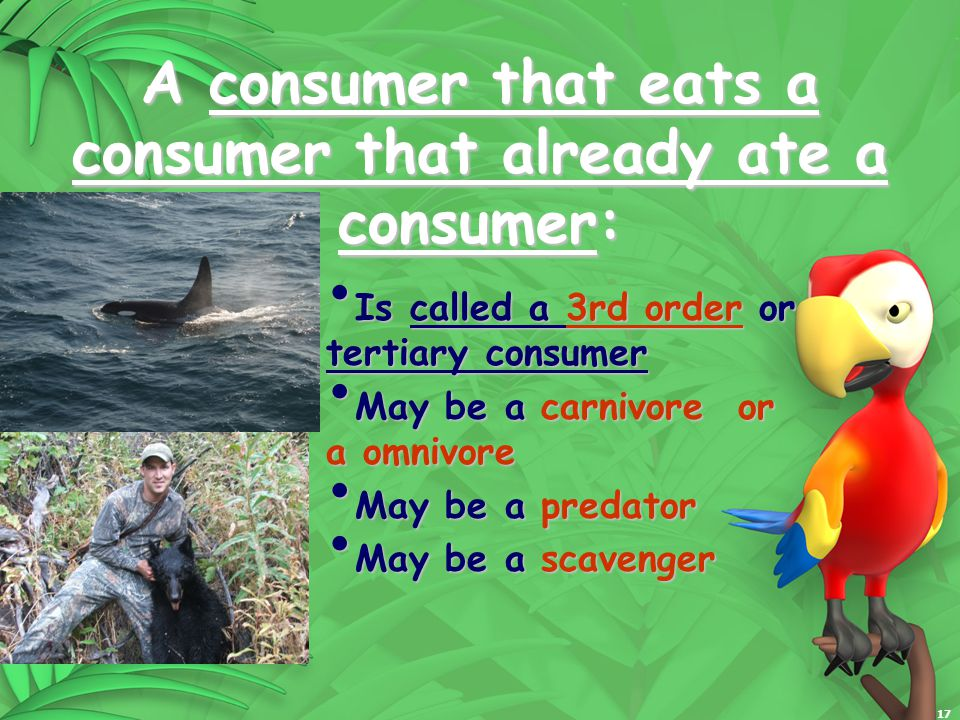 17 A consumer that eats a consumer that already ate a consumer: Is called a 3rd order or tertiary consumer Is called a 3rd order or tertiary consumer May be a carnivore or a omnivore May be a carnivore or a omnivore May be a predator May be a predator May be a scavenger May be a scavenger