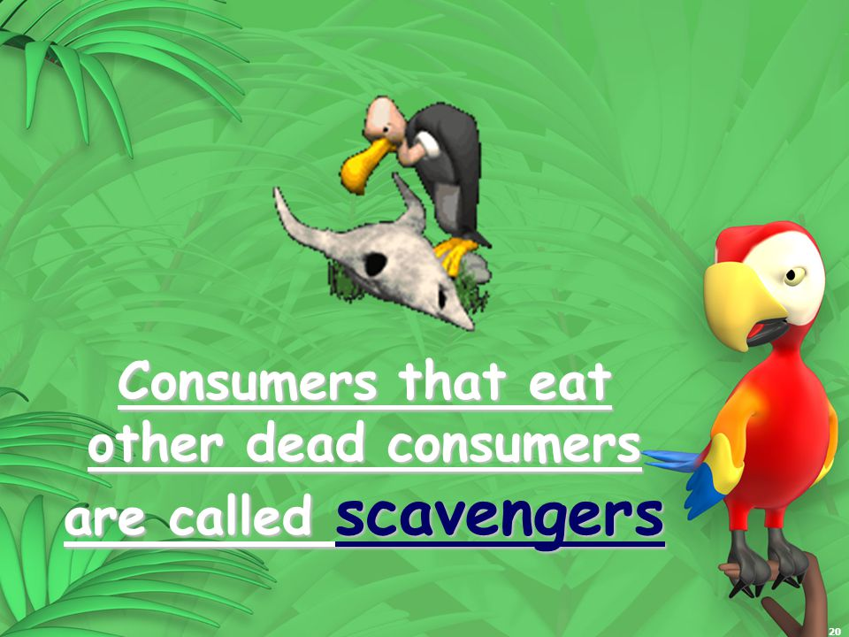 20 Consumers that eat other dead consumers are called scavengers