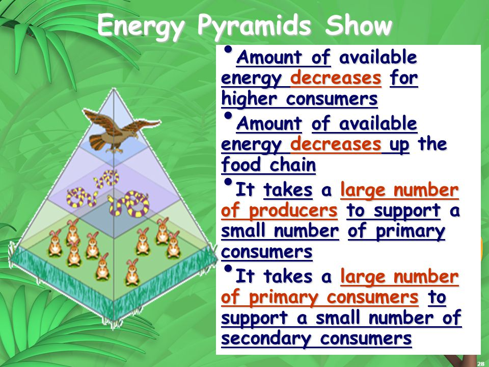 28 Energy Pyramids Show Amount of available energy decreases for higher consumers Amount of available energy decreases for higher consumers Amount of available energy decreases up the food chain Amount of available energy decreases up the food chain It takes a large number of producers to support a small number of primary consumers It takes a large number of producers to support a small number of primary consumers It takes a large number of primary consumers to support a small number of secondary consumers It takes a large number of primary consumers to support a small number of secondary consumers