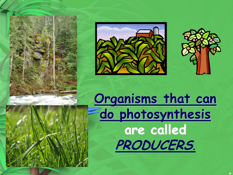 4 Organisms that can do photosynthesis are called Organisms that can do photosynthesis are called PRODUCERS.