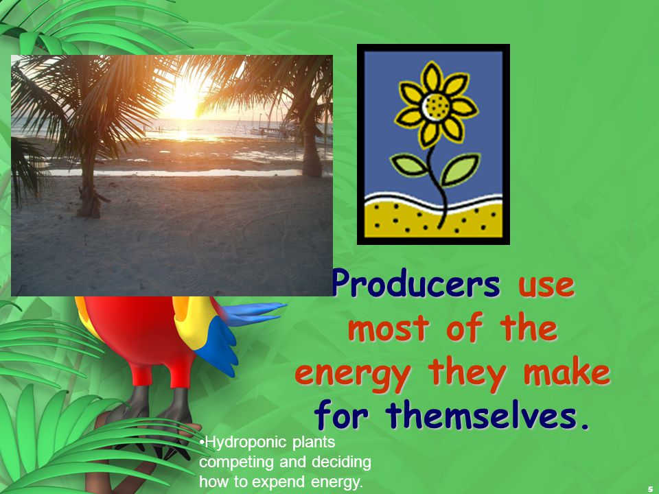 16 Some of the energy is lost as heat, but some energy is stored and can passed on to another consumer.