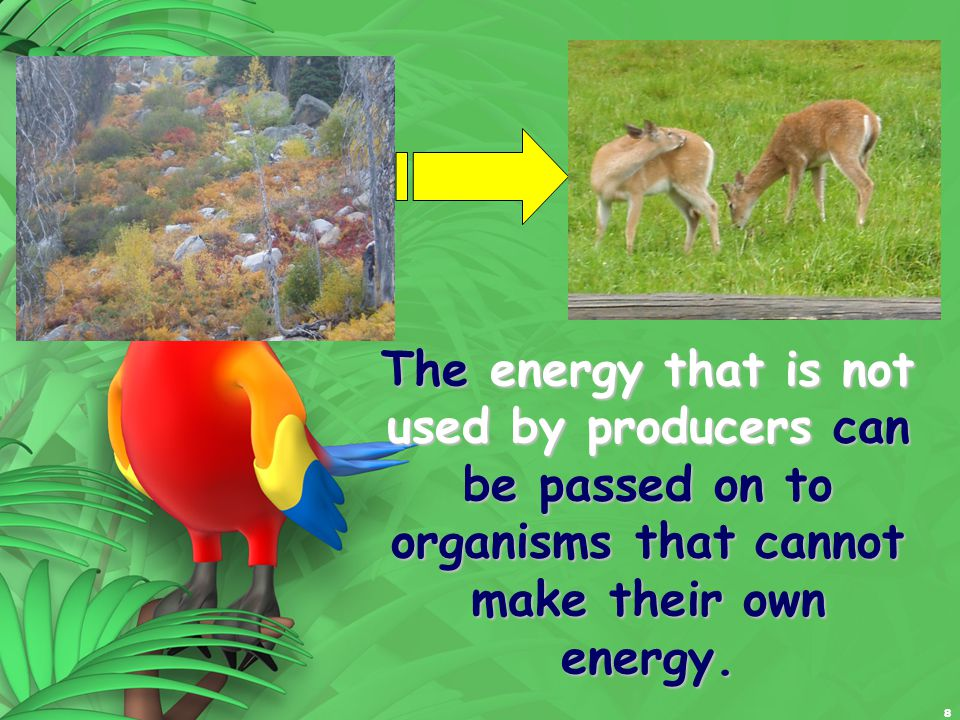 8 The energy that is not used by producers can be passed on to organisms that cannot make their own energy.