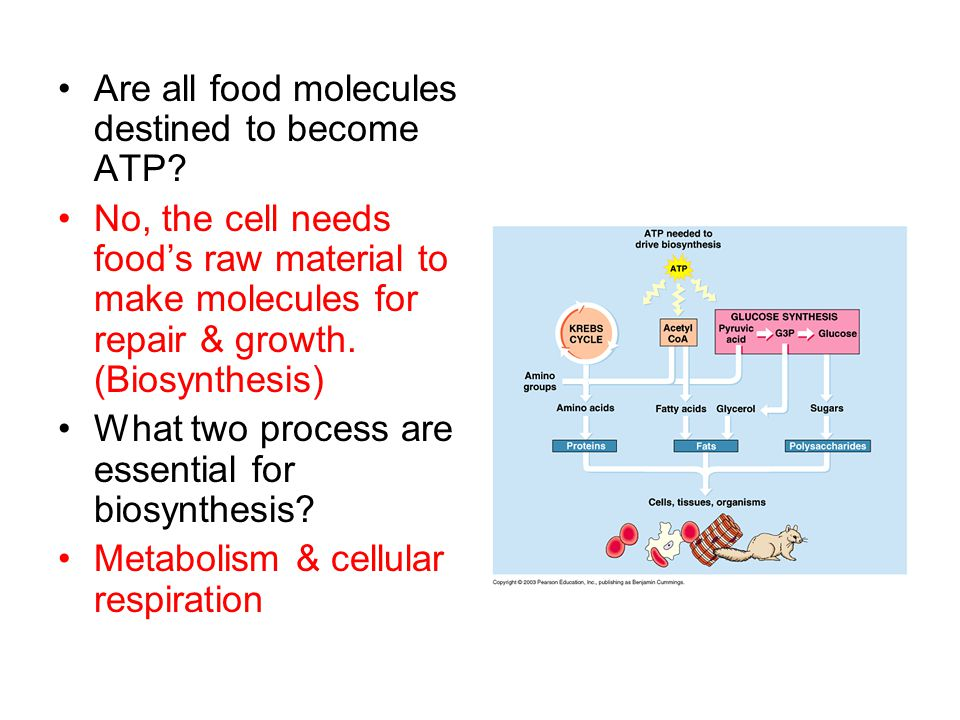 Where does the fuel for cellular respiration ultimately come from.
