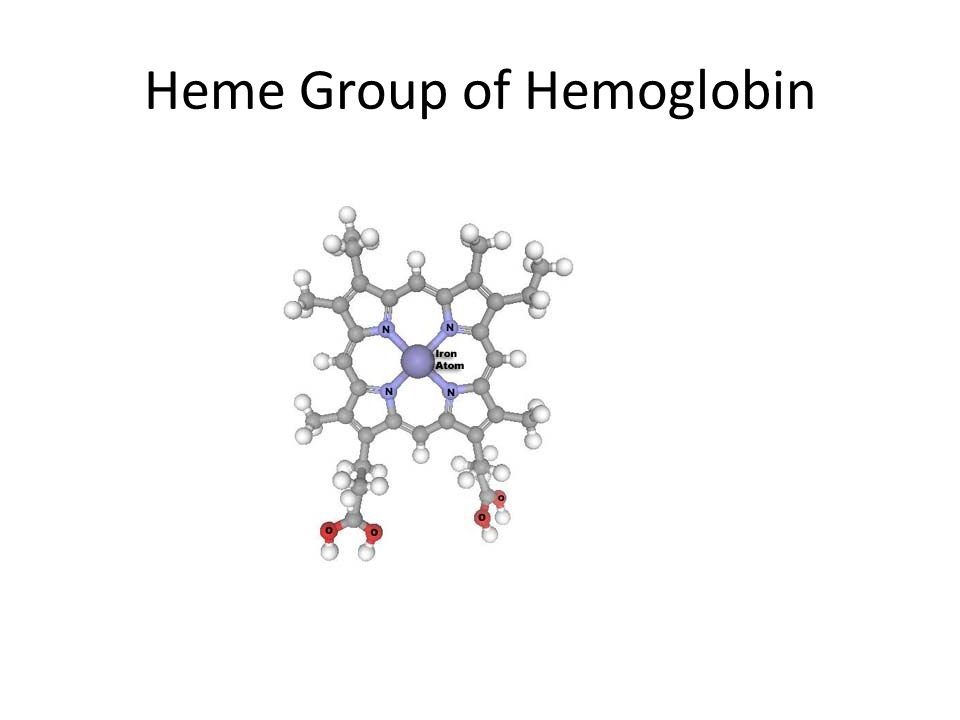 Hemoglobin Why use a carrier molecule? – O 2 not soluble enough in H 2 O for animal needs blood alone could not provide enough O 2 to animal cells hem
