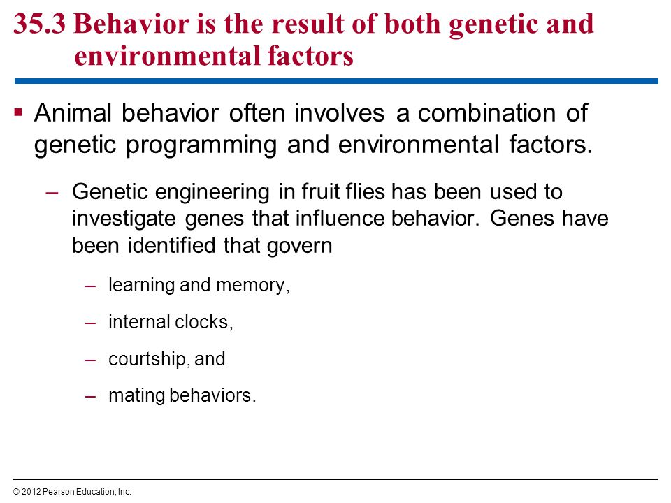 35.3 Behavior is the result of both genetic and environmental factors  Animal behavior often involves a combination of genetic programming and environmental factors.