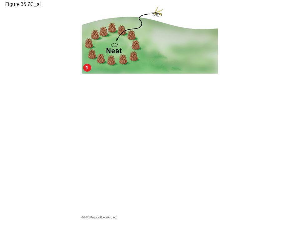 Figure 35.7C_s1 Nest 1