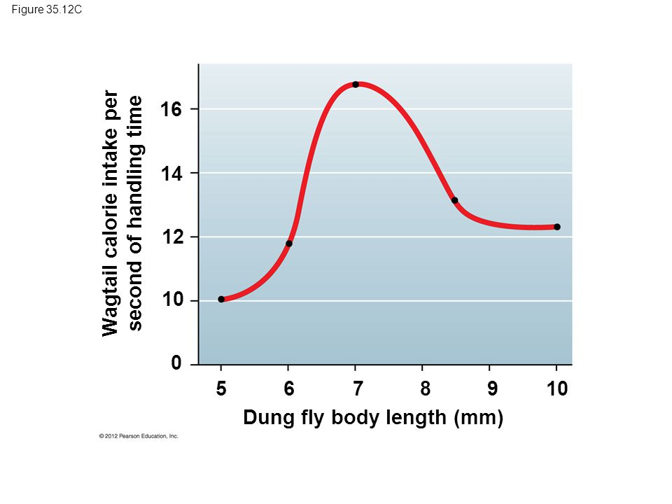 Figure 35.12C Dung fly body length (mm) 16 14 12 10 0 Wagtail calorie intake per second of handling time 5678910