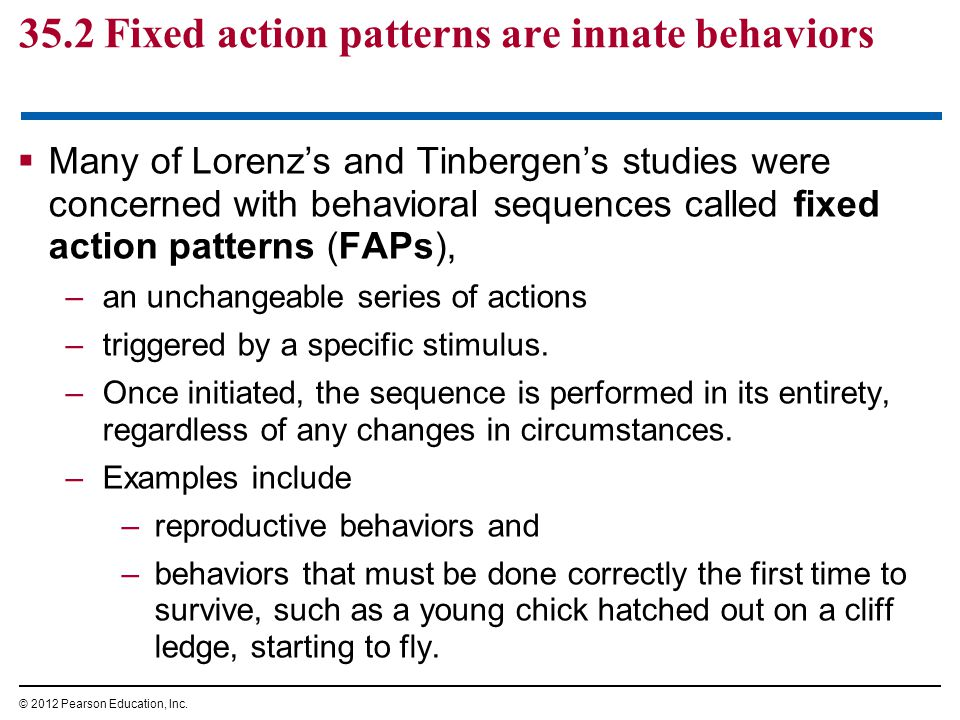 35.2 Fixed action patterns are innate behaviors  Many of Lorenz's and Tinbergen's studies were concerned with behavioral sequences called fixed action patterns (FAPs), –an unchangeable series of actions –triggered by a specific stimulus.