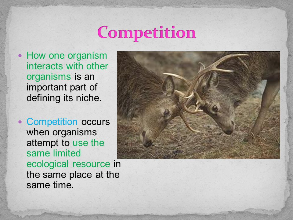 How one organism interacts with other organisms is an important part of defining its niche. Competition occurs when organisms attempt to use the same