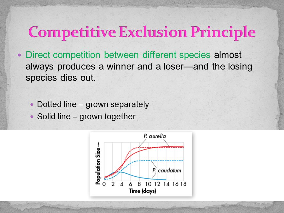 Direct competition between different species almost always produces a winner and a loser—and the losing species dies out. Dotted line – grown separate