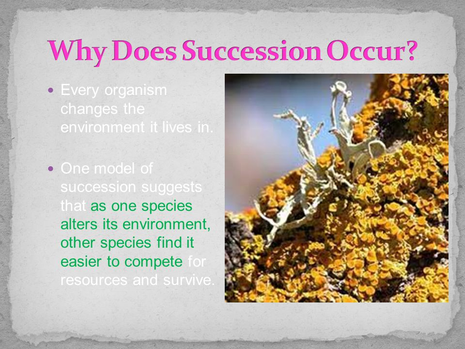 Every organism changes the environment it lives in. One model of succession suggests that as one species alters its environment, other species find it