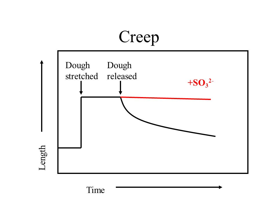 Dough stretched Dough released Time Length +SO 3 2- Creep