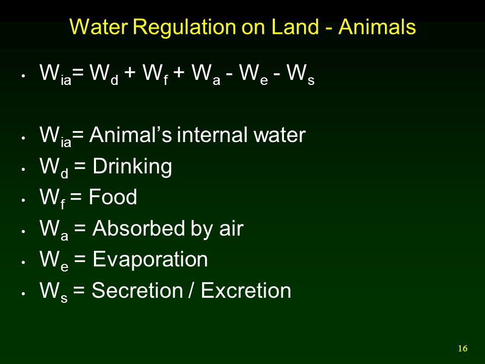 16 Water Regulation on Land - Animals W ia = W d + W f + W a - W e - W s W ia = Animal's internal water W d = Drinking W f = Food W a = Absorbed by ai