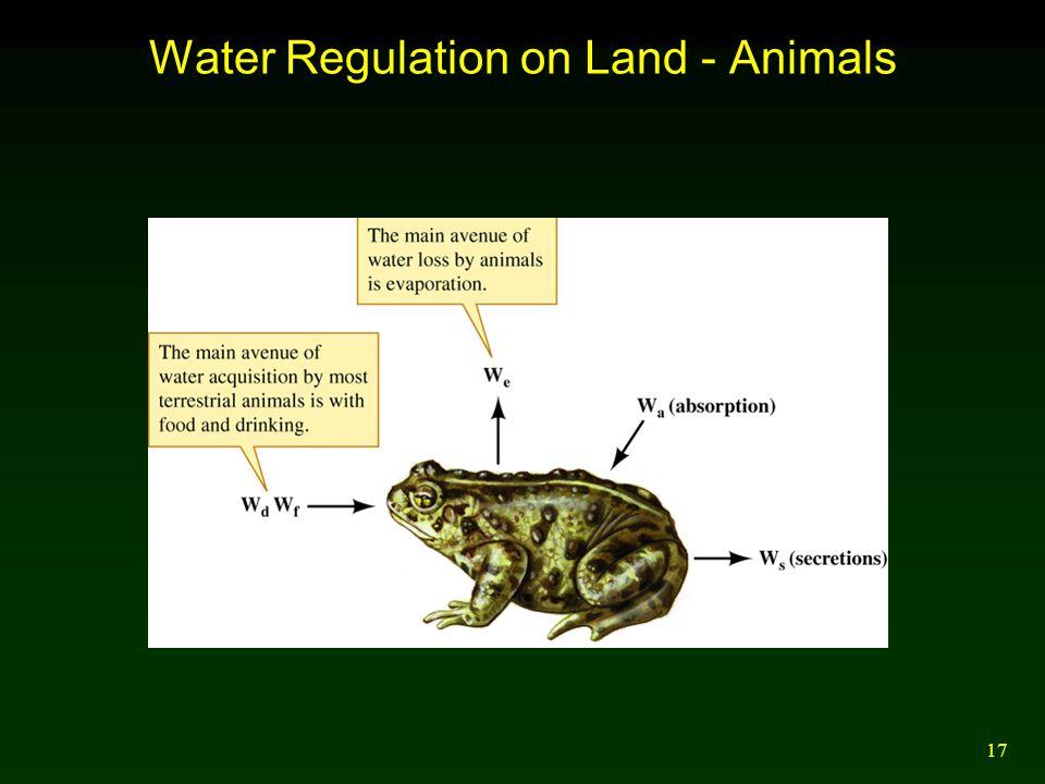 17 Water Regulation on Land - Animals