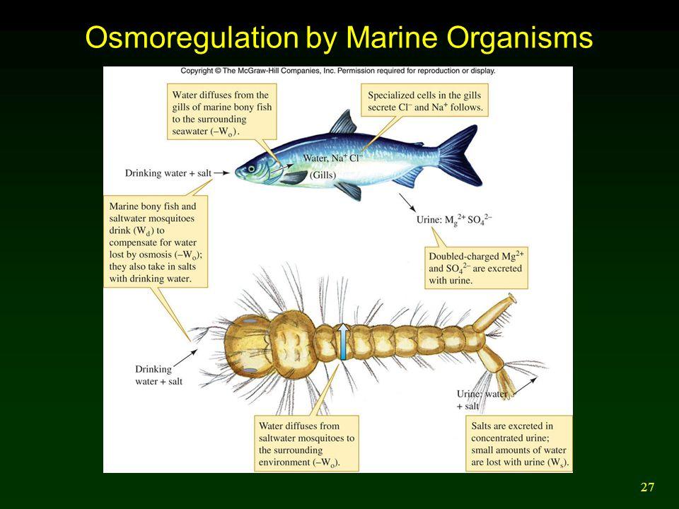 27 Osmoregulation by Marine Organisms