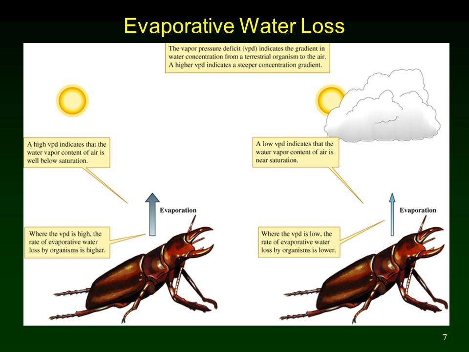 7 Evaporative Water Loss