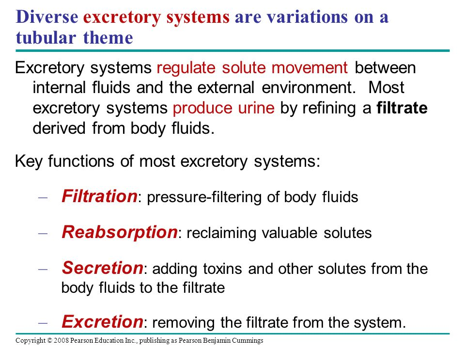 Key functions of excretory systems: an overview Capillary Excretion Secretion Reabsorption Tubule --> blood Excretory tubule Filtration Blood --> tubule Filtrate Urine