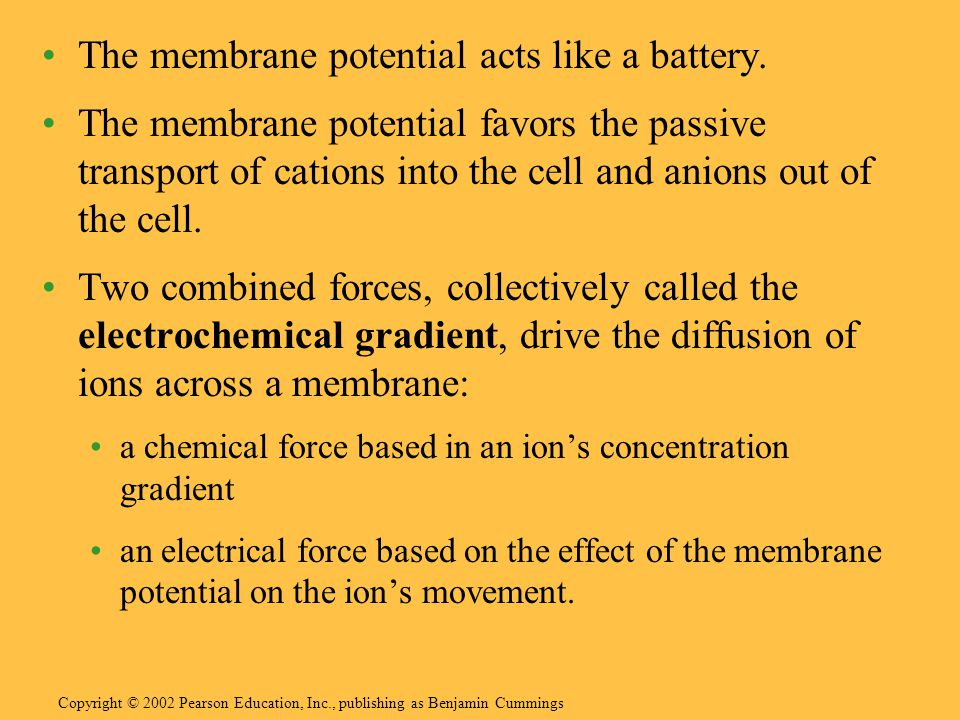 The membrane potential acts like a battery. The membrane potential favors the passive transport of cations into the cell and anions out of the cell. T