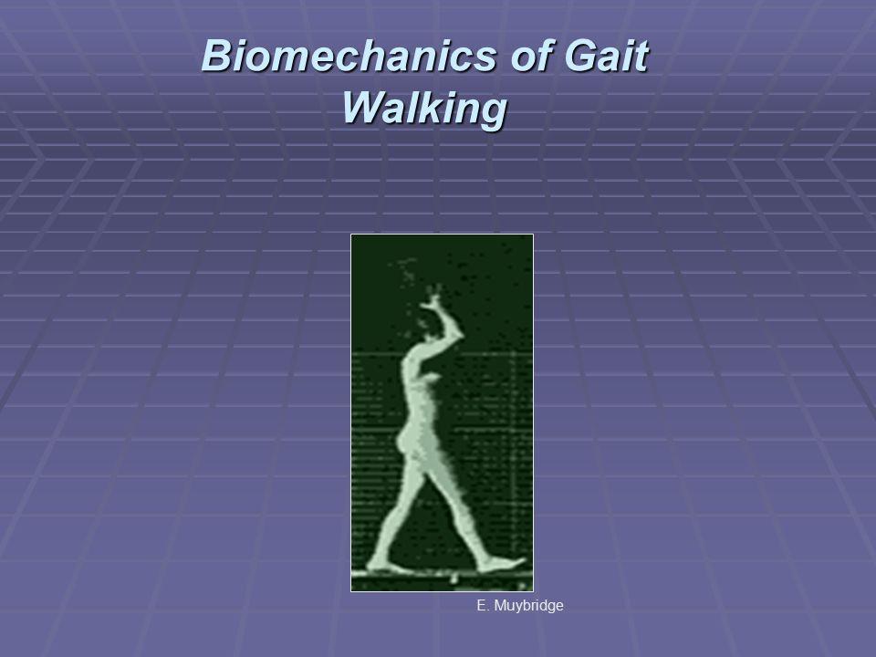 Biomechanics of Gait Walking E. Muybridge