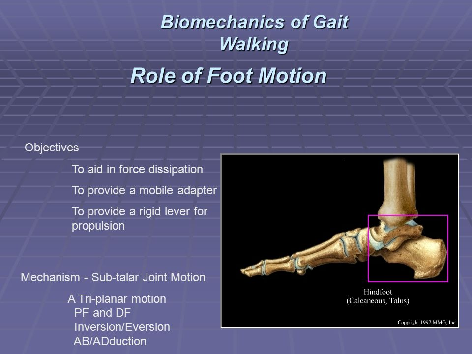 Role of Foot Motion Objectives To aid in force dissipation To provide a mobile adapter To provide a rigid lever for propulsion Mechanism - Sub-talar J
