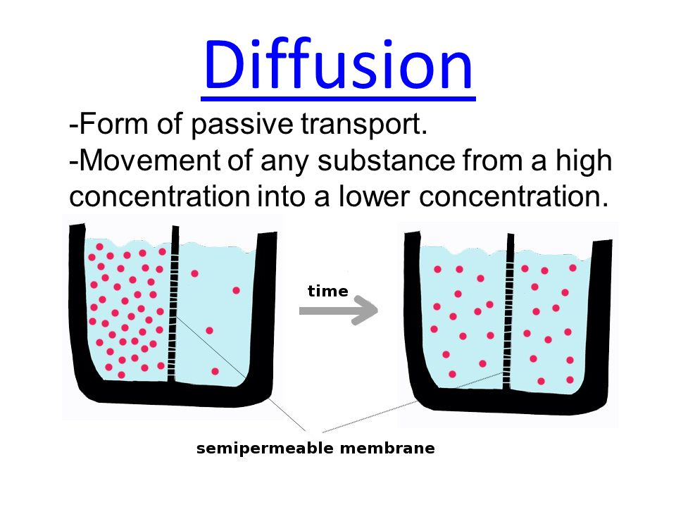 Diffusion -Form of passive transport.