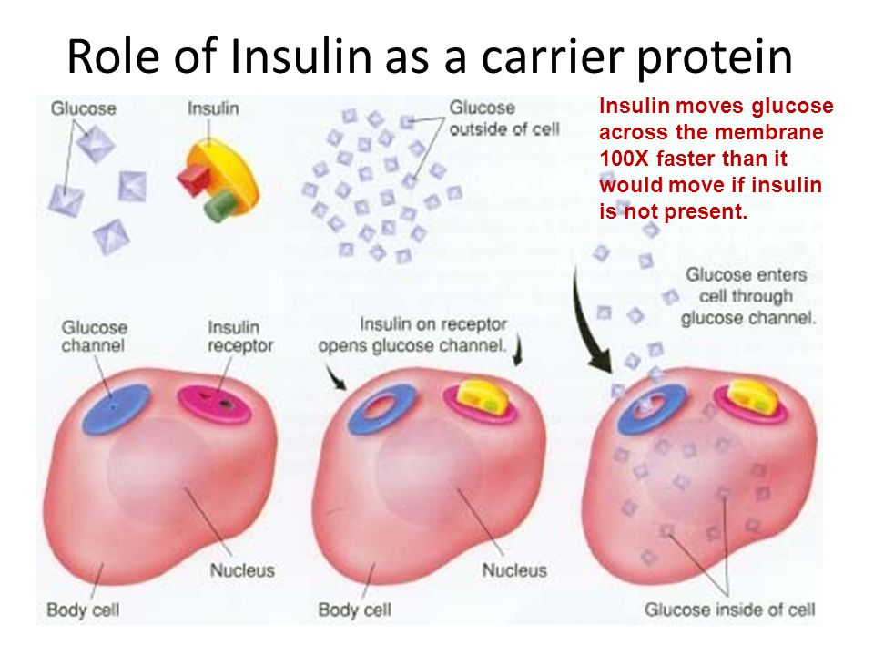 Role of Insulin as a carrier protein Insulin moves glucose across the membrane 100X faster than it would move if insulin is not present.
