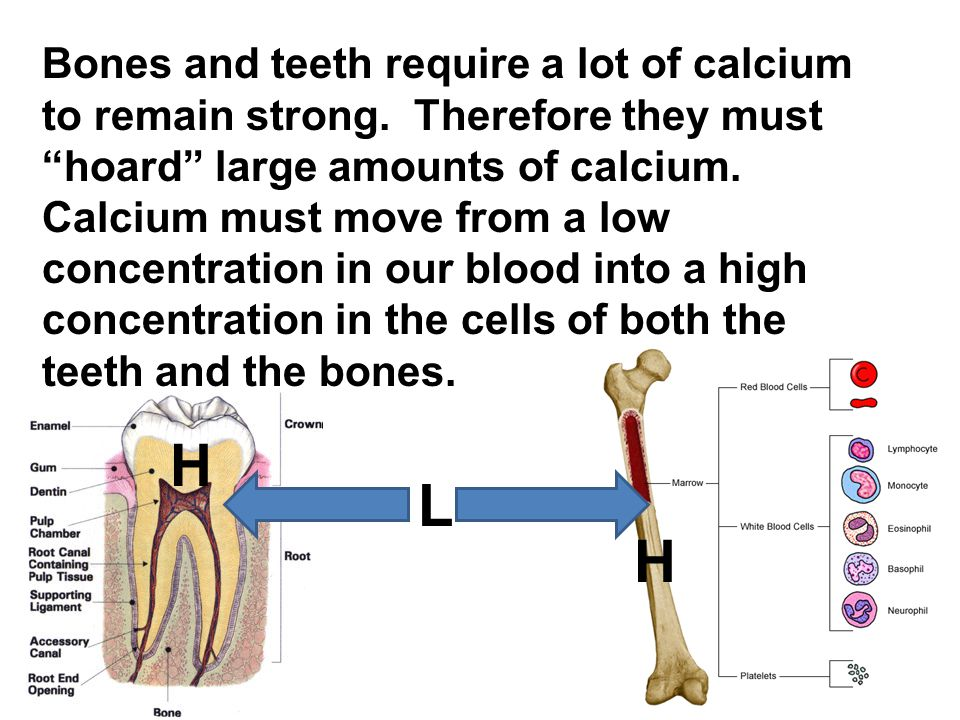Bones and teeth require a lot of calcium to remain strong.