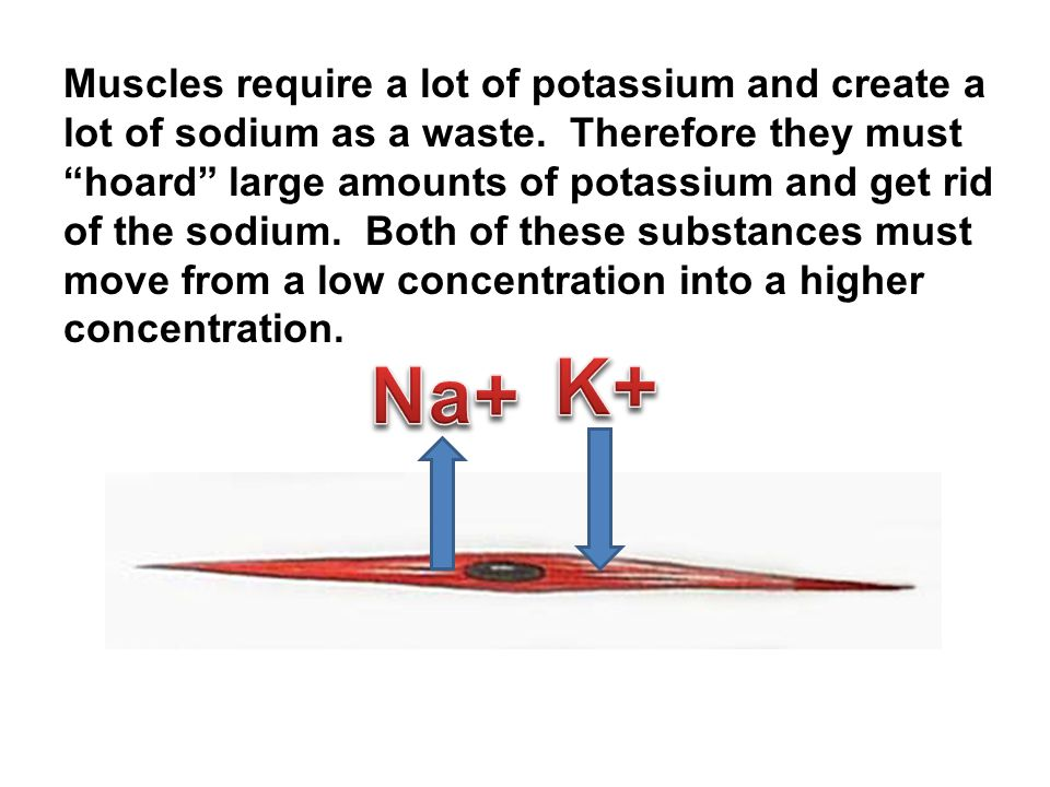 Muscles require a lot of potassium and create a lot of sodium as a waste.