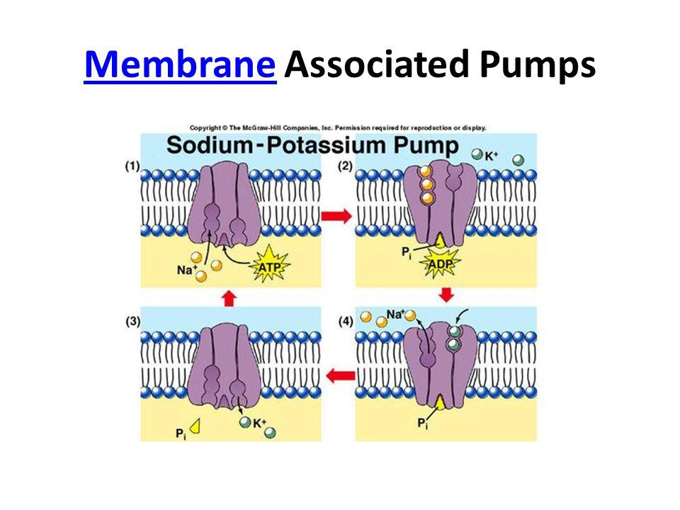 MembraneMembrane Associated Pumps