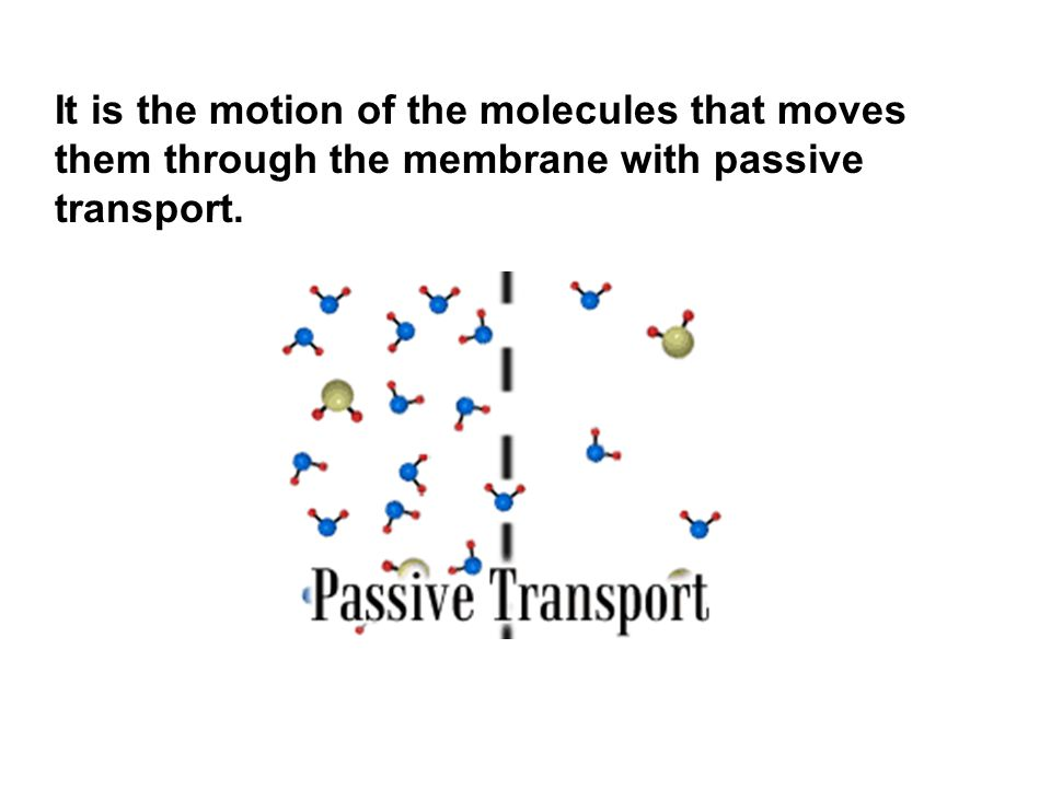 It is the motion of the molecules that moves them through the membrane with passive transport.