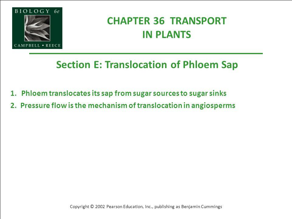 CHAPTER 36 TRANSPORT IN PLANTS Copyright © 2002 Pearson Education, Inc., publishing as Benjamin Cummings Section E: Translocation of Phloem Sap 1.Phlo