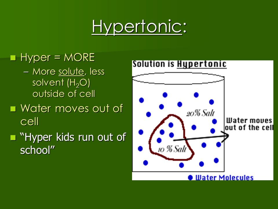 Hypertonic: Hyper = MORE Hyper = MORE –More solute, less solvent (H 2 O) outside of cell Water moves out of cell Water moves out of cell Hyper kids run out of school Hyper kids run out of school