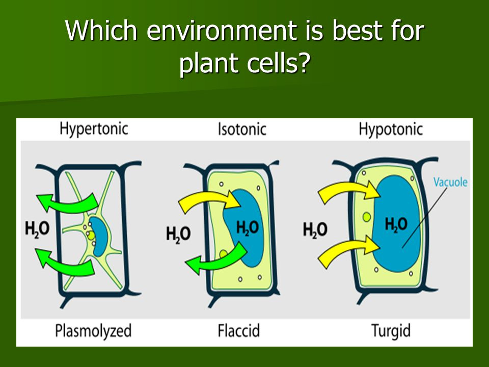 Which environment is best for plant cells