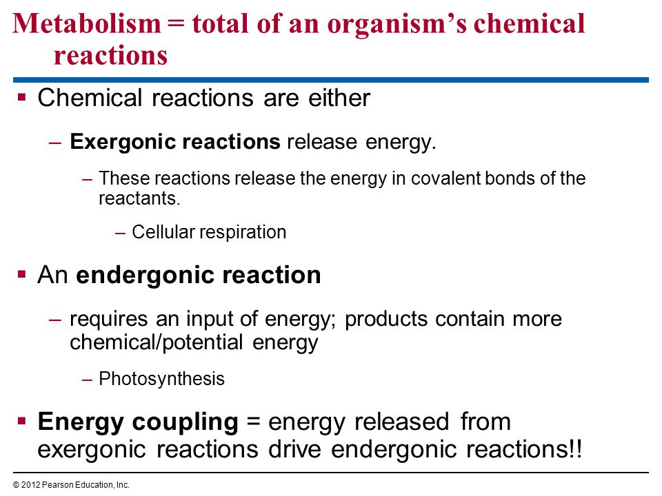 Metabolism = total of an organism's chemical reactions  Chemical reactions are either –Exergonic reactions release energy. –These reactions release t
