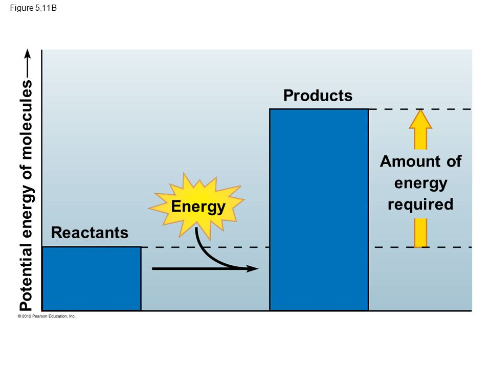 Figure 5.11B Reactants Energy Products Amount of energy required Potential energy of molecules
