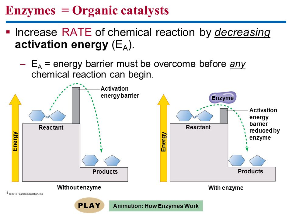 Enzymes = Organic catalysts  Increase RATE of chemical reaction by decreasing activation energy (E A ). –E A = energy barrier must be overcome before