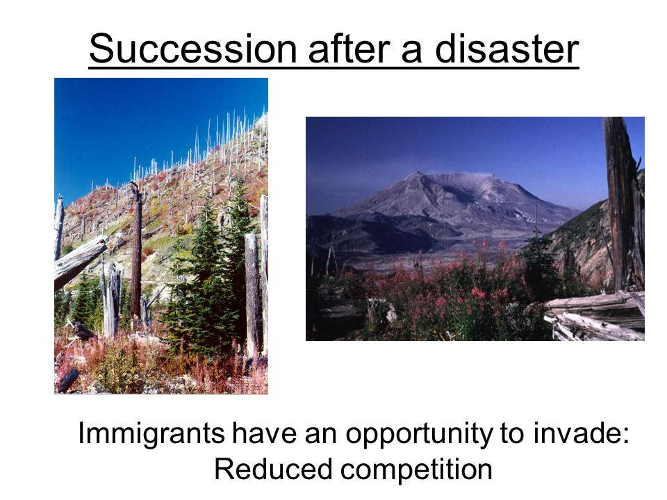 Succession after a disaster Immigrants have an opportunity to invade: Reduced competition