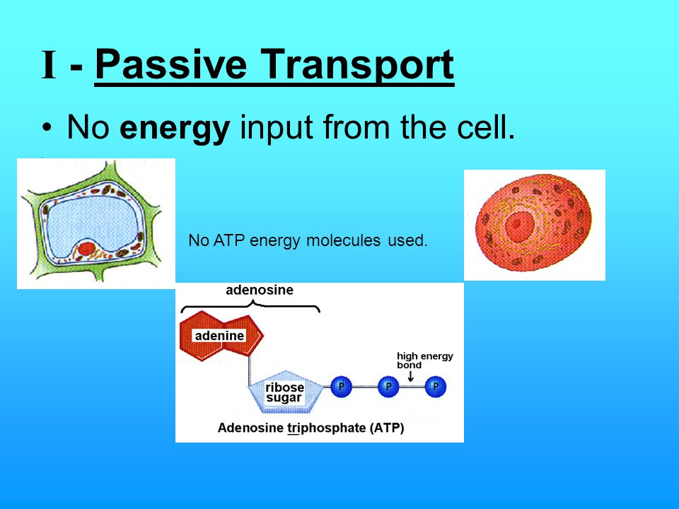 Simplest type of Passive Transport: (simple) Diffusion It is the (random) movement of molecules from an area of higher concentration to an area of lower concentration.