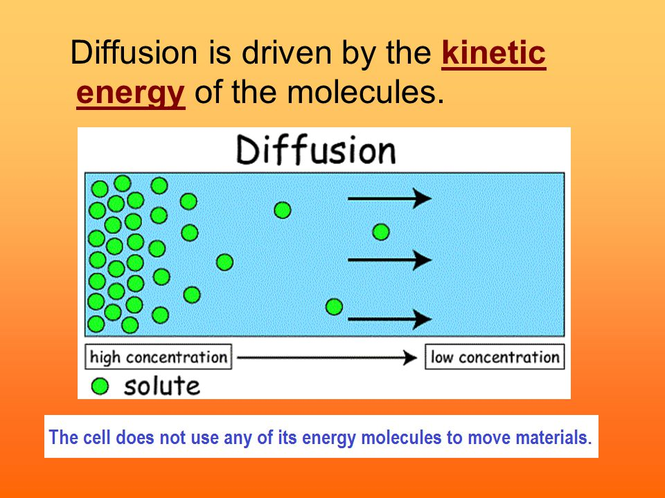 How do cells deal with osmosis.