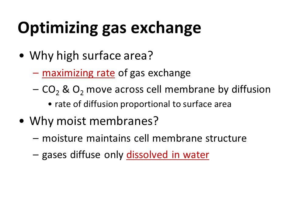 Optimizing gas exchange Why high surface area.