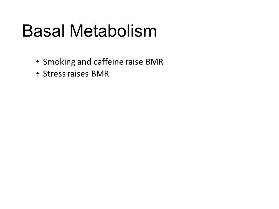 Basal Metabolism Smoking and caffeine raise BMR Stress raises BMR